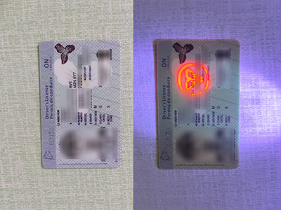How a fake Ontario driver's licence looks under UV light